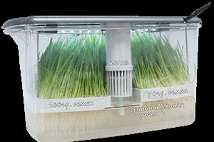 RAW Dream Sprouter - микроферма и мини огород