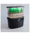 Как прорастить зёрна в домашних условиях?
